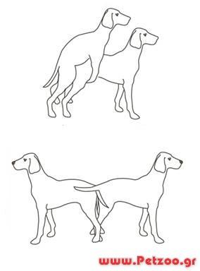 ζευγάρωμα σκύλου